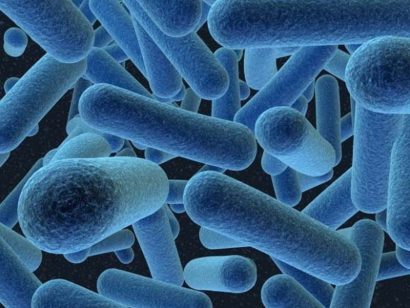 """Bakteriyaların """"danışmaq"""" qabiliyyəti var imiş!? - 1"""
