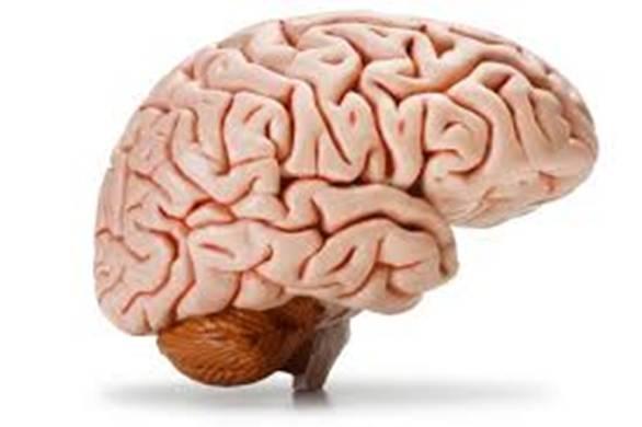 Beynimiz haqqında bilmədiyimiz 10 fakt - 1