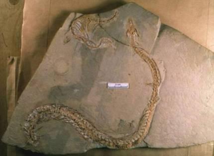Livanda ayaqlı qədim ilan tapılıb - 3